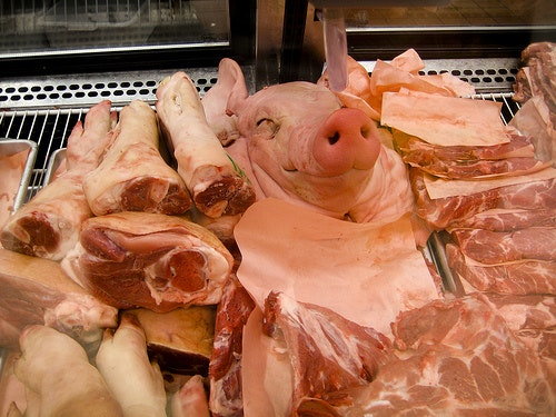 Image result for eating meat animal head