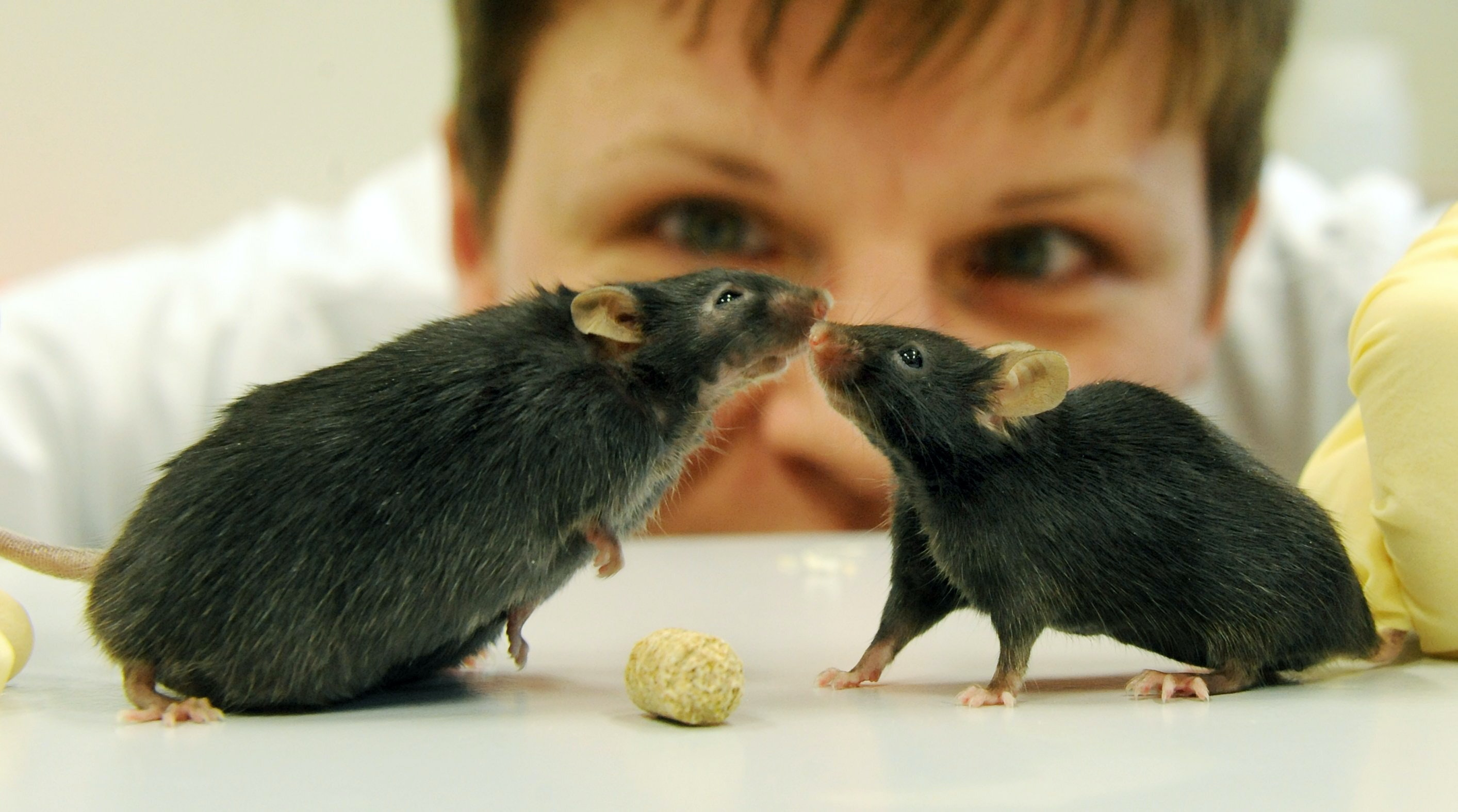 The debate about the ethics of people engaging in animal research