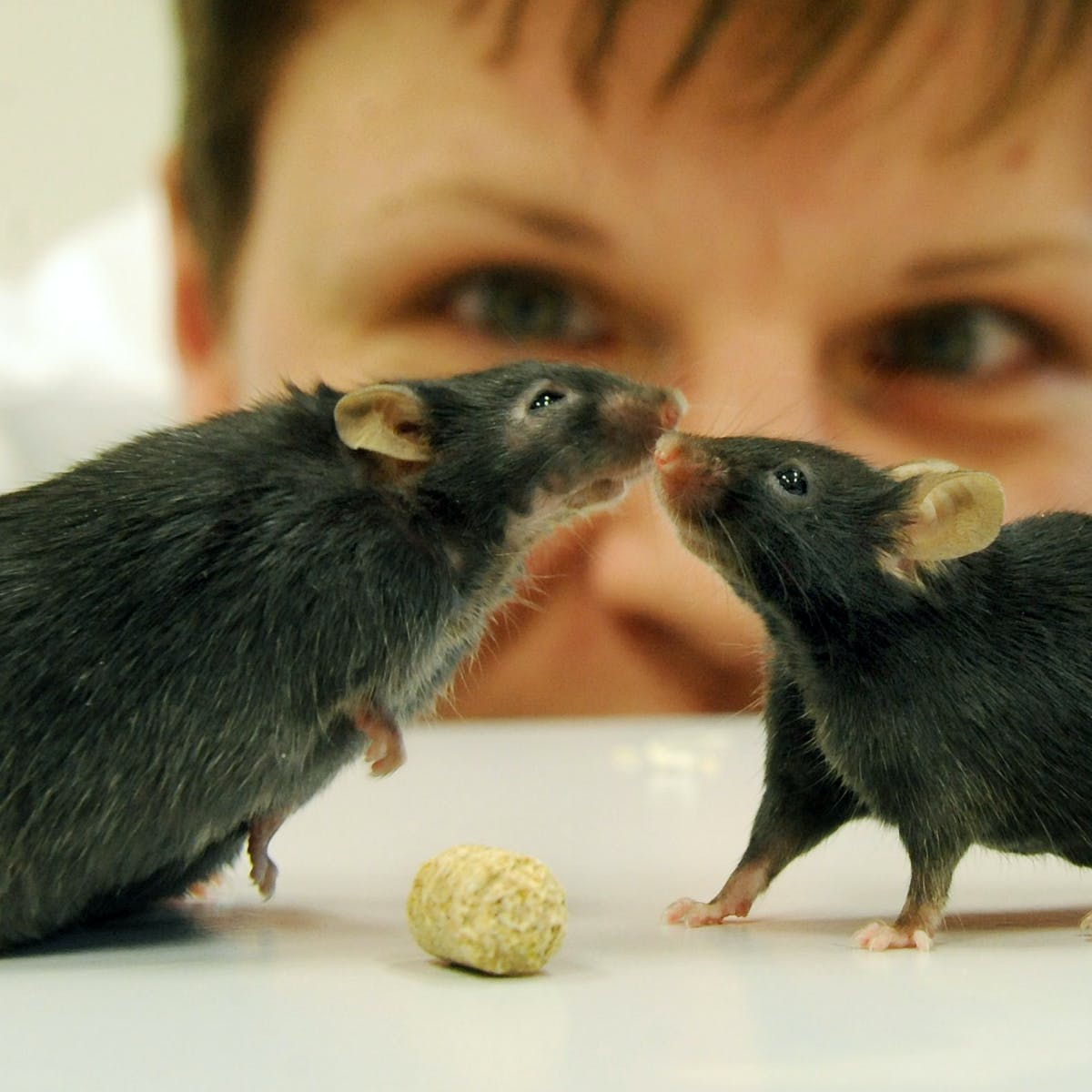 Animal research: is it a necessary evil?