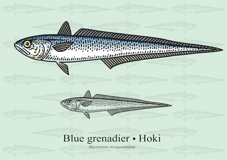 New Zealand's hoki fishery under scrutiny after claims of