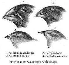 Darwin's On the Origin of Species