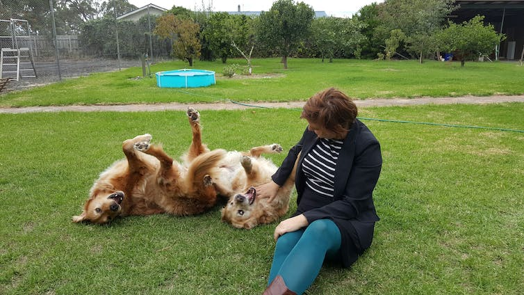 Is Your Dog Happy? Ten Common Misconceptions About Dog Behaviour