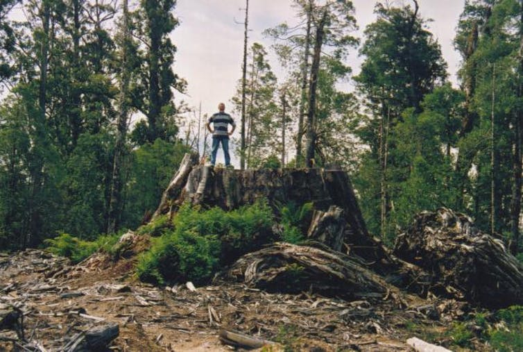 the tallest flowering plant in the world