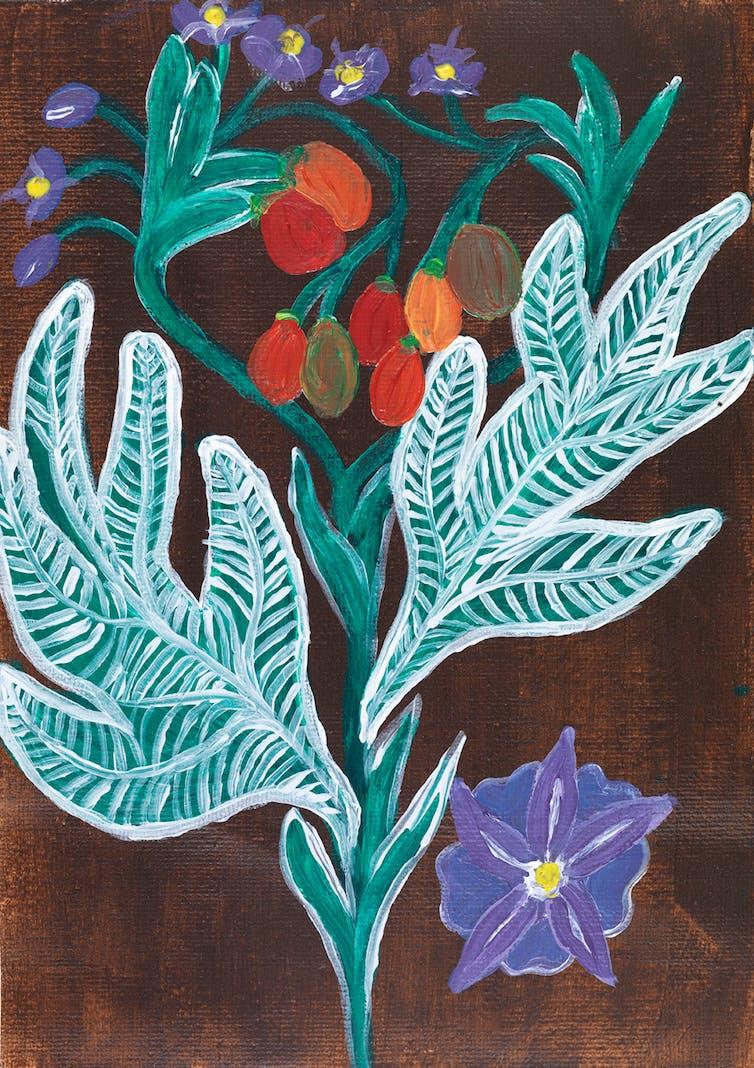 five medicinal plants used by Aboriginal Australians