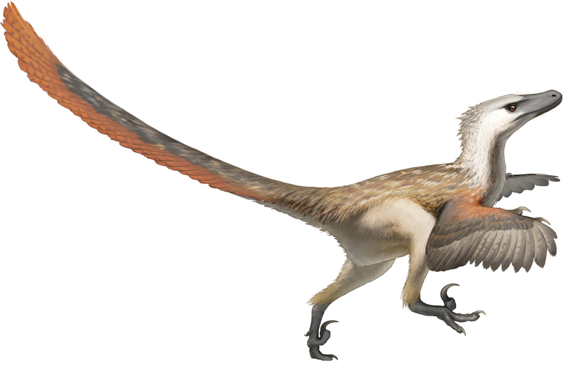 Jurassic Park - A Velociraptor