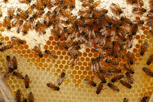 Bees Join An Elite Group Of Species That Understands The Concept Zero As A Number