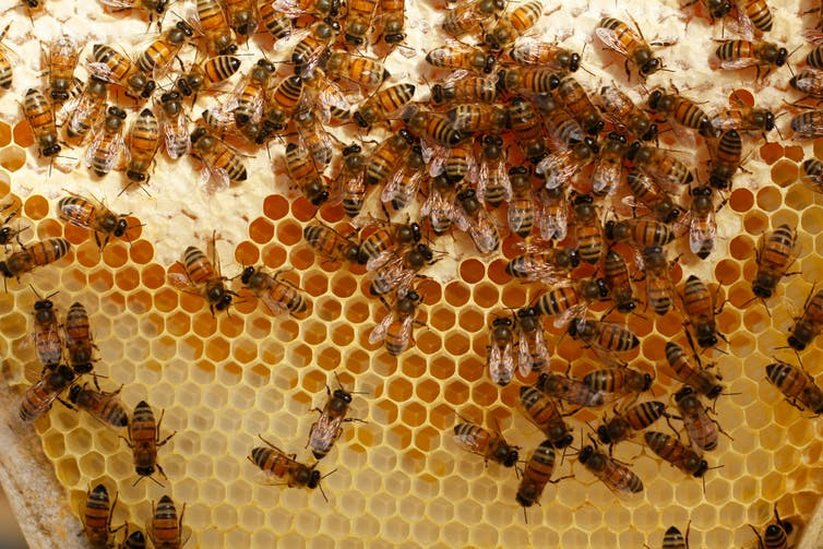Bees join an elite group of species that understands the concept of zero as a number
