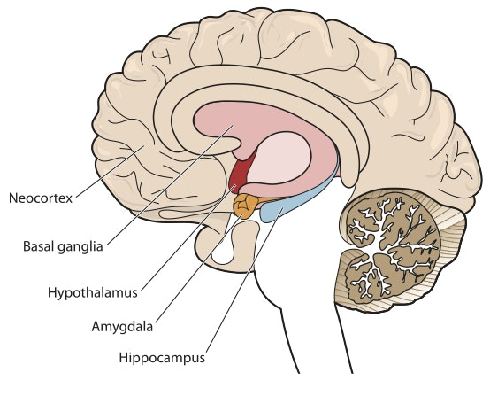 the brains of violent males essay Sex differences in psychology are differences in the mental functions and  behaviors of the  a study was conducted to explore regions within the brain  that are activated during working memory tasks in males versus females four  different  in humans, males engage in crime and especially violent crime more  than females.