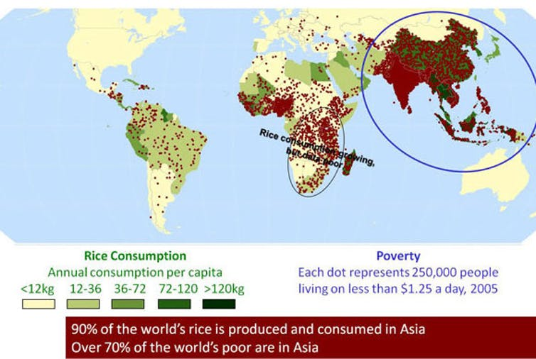 Many of poorest regions in Asia rely on rice as a staple food. IRRI, CC BY-NC-SA
