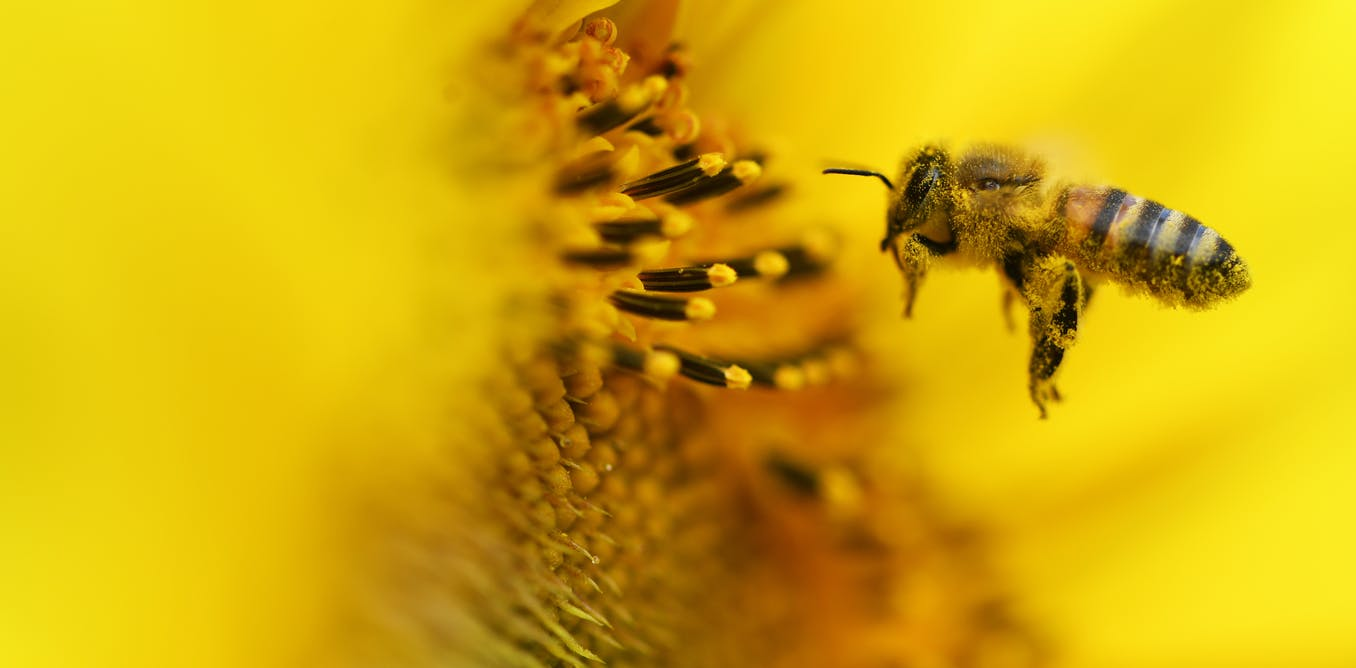 Bees Get Stressed At Work Too And It Might Be Causing Colony Collapse
