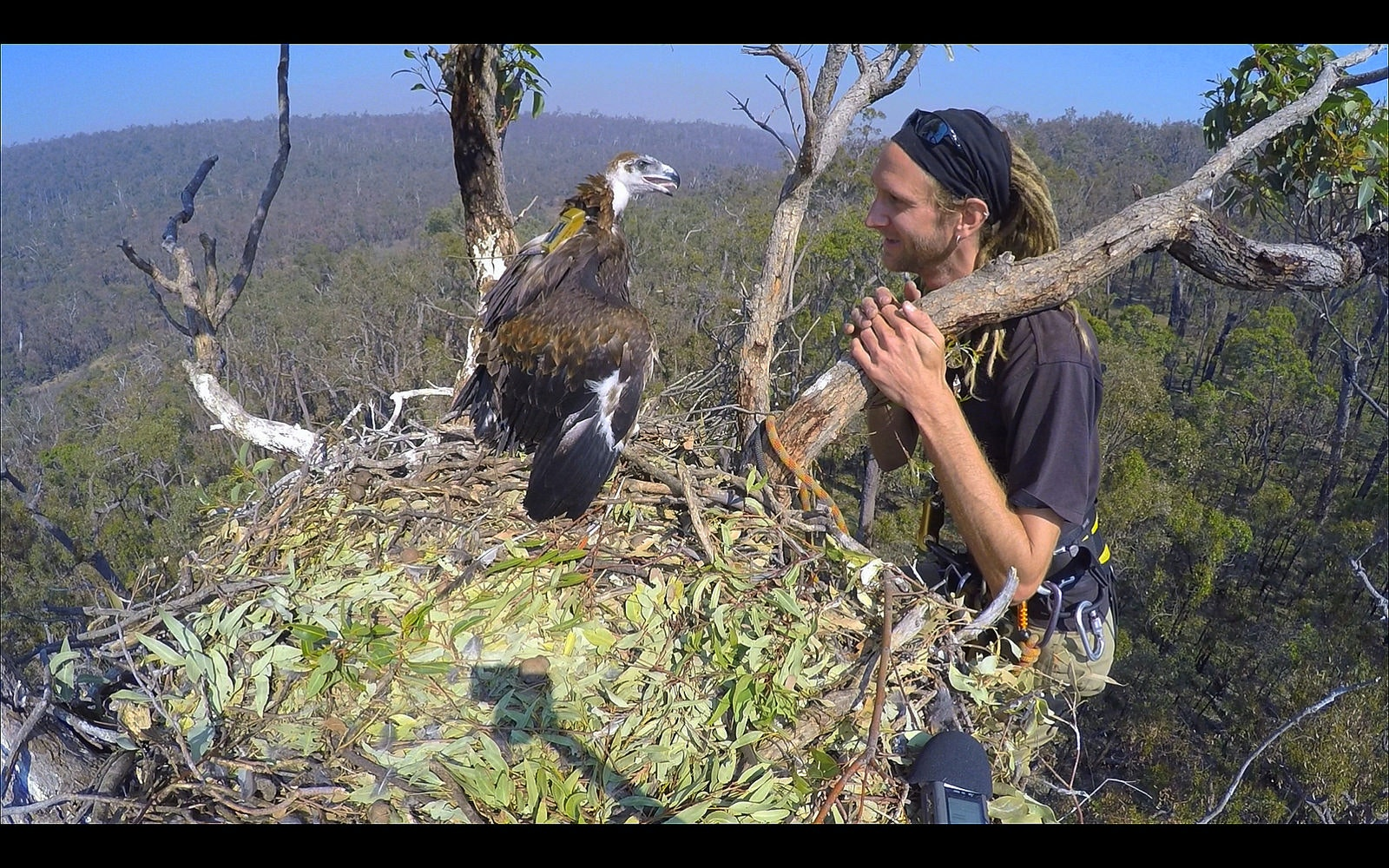 Mass slaughter of wedge-tailed eagles could have Australia-wide consequences