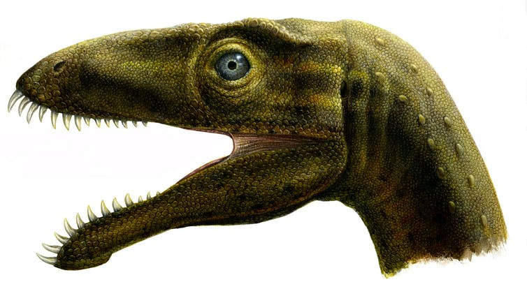 Reconstruction of the small Madagascan theropod Masiakasaurus, whose bizarre teeth were possibly an influence on the creation of the new hybrid dinosaur 'Indoraptor'