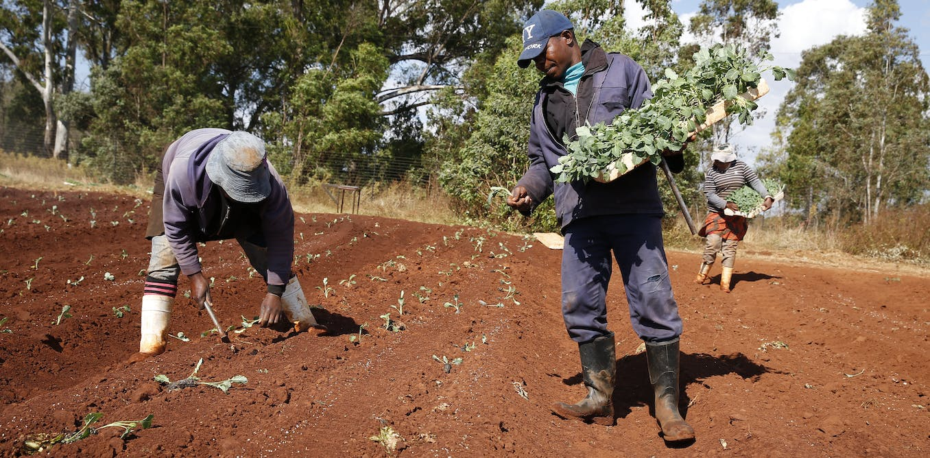 Why it's beneficial to organise smallholder farmers into groups