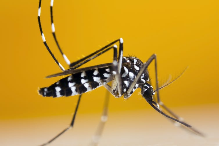 Why Your Summer Might Be Full Of Mosquitoes According To A Scientist