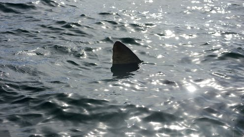 public accuse the media of deliberately fuelling shark fear