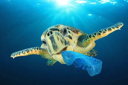 Curious Kids: How do plastic bags harm our environment and sea life?