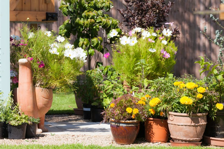 The best time to water your plants during a heatwave