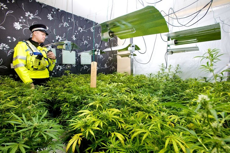 Image result for south australia police and cannabis