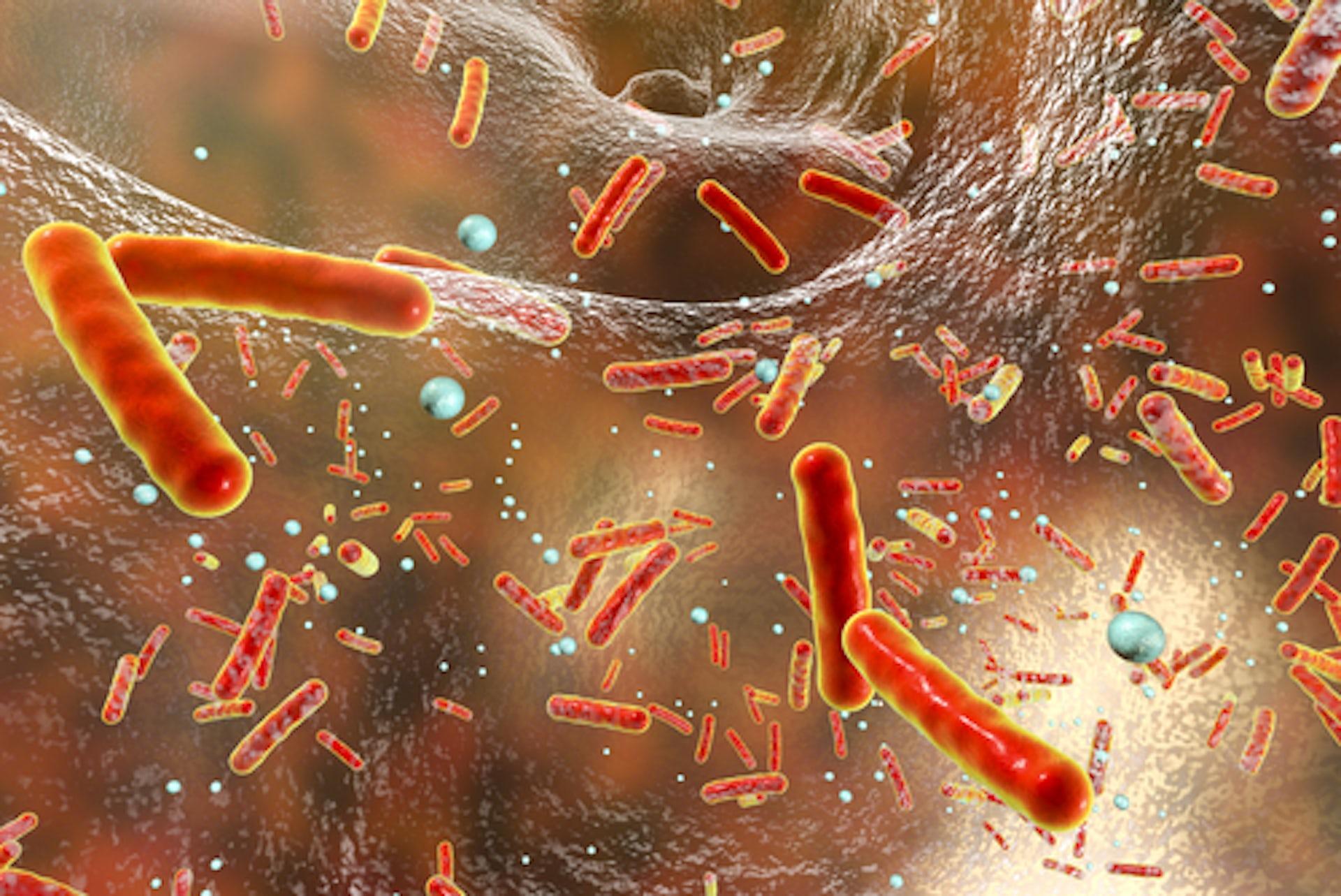microscopic cells
