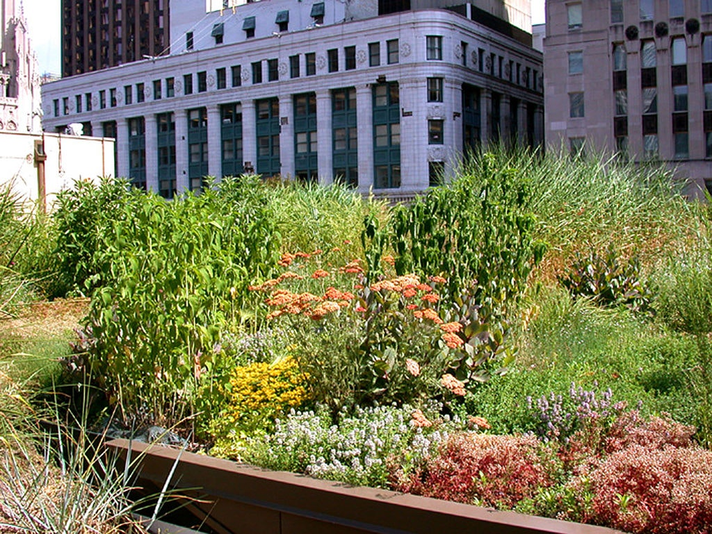 Green roof on Chicago's City Hall. Conservation Design Forum, CC BY-SA