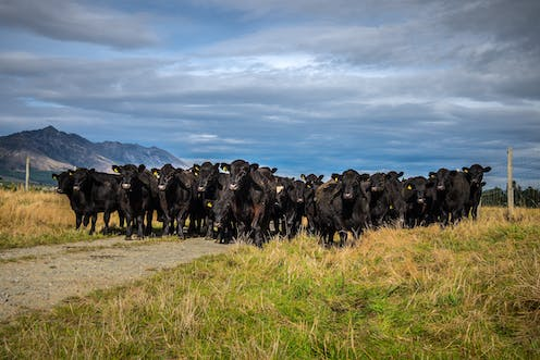 New Zealand's zero carbon bill: much ado about methane