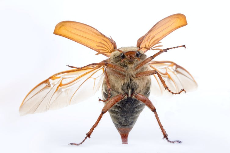If an insect is flying in a car while it is moving, does the insect have to move at the same speed?