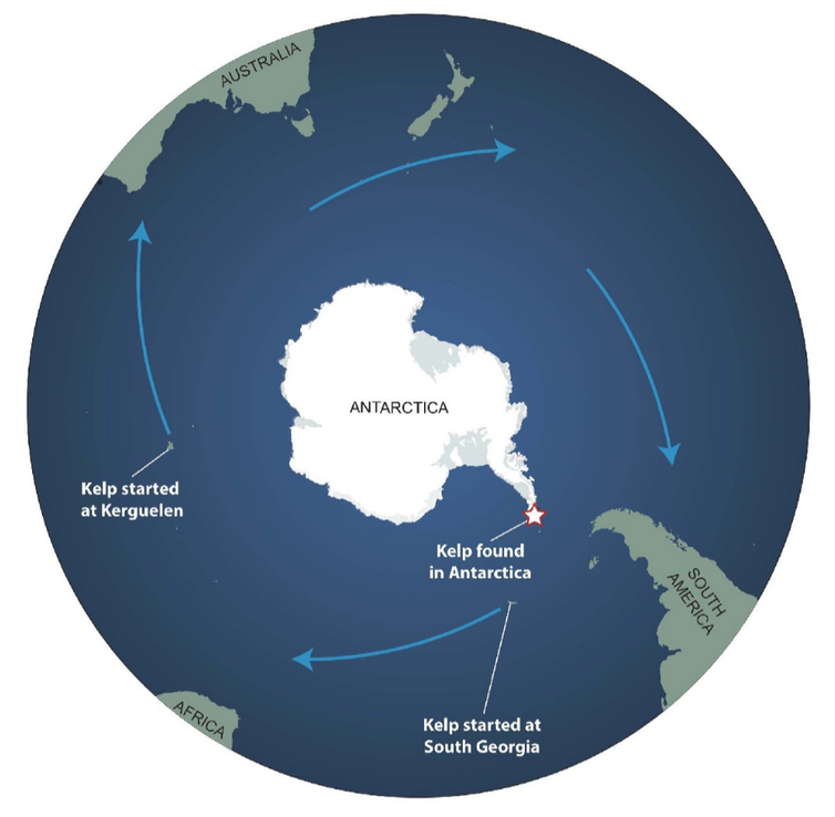 How an alien seaweed invasion spawned an Antarctic mystery