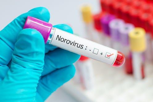 norovirus spread time