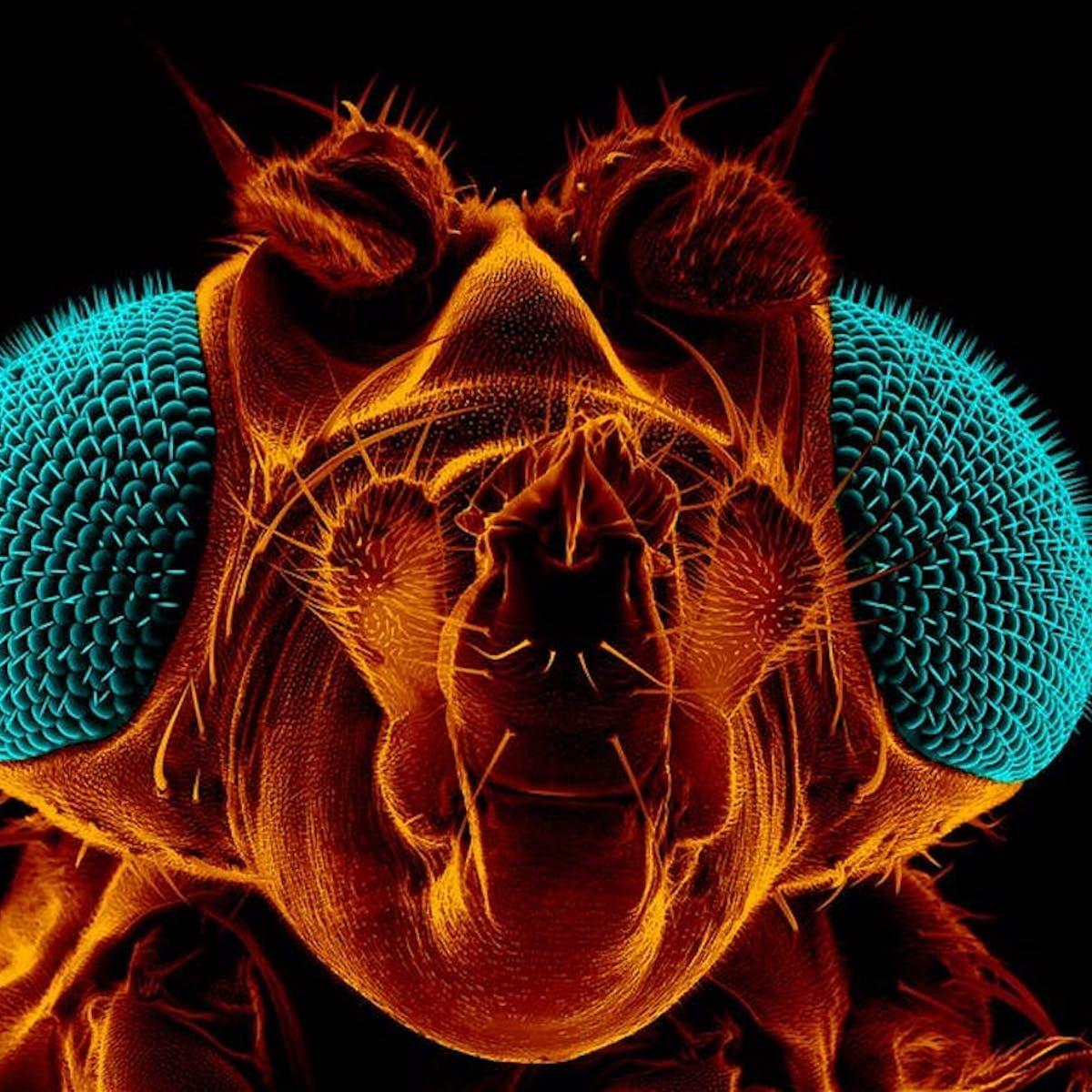 Comment Éloigner Les Mouches À L Extérieur comment tuer les mouches à fruit, selon un scientifique