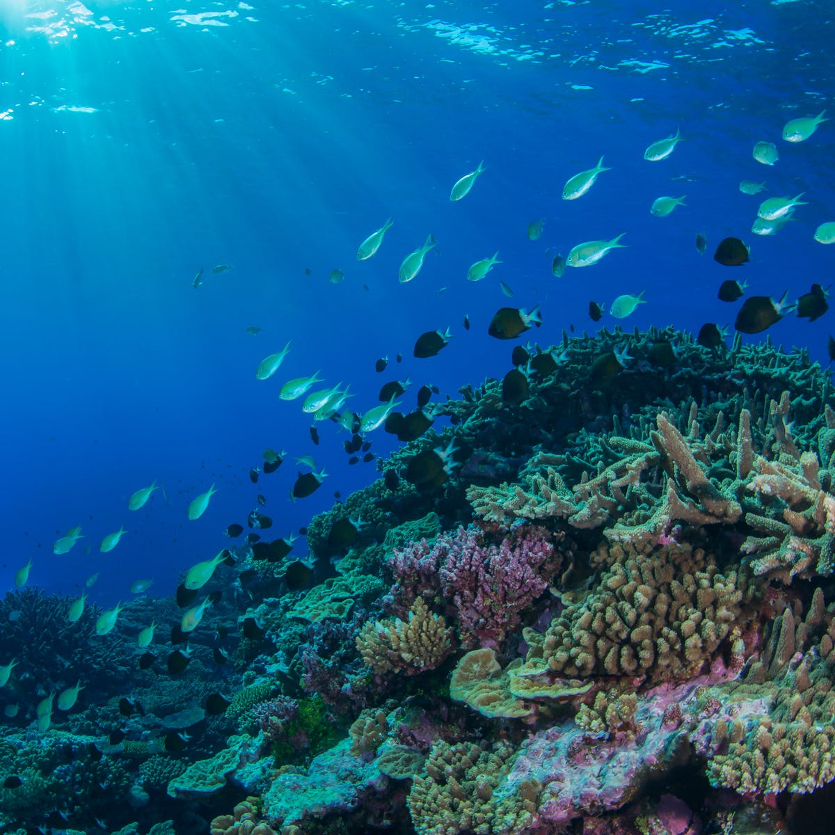 The 2016 Great Barrier Reef heatwave caused widespread