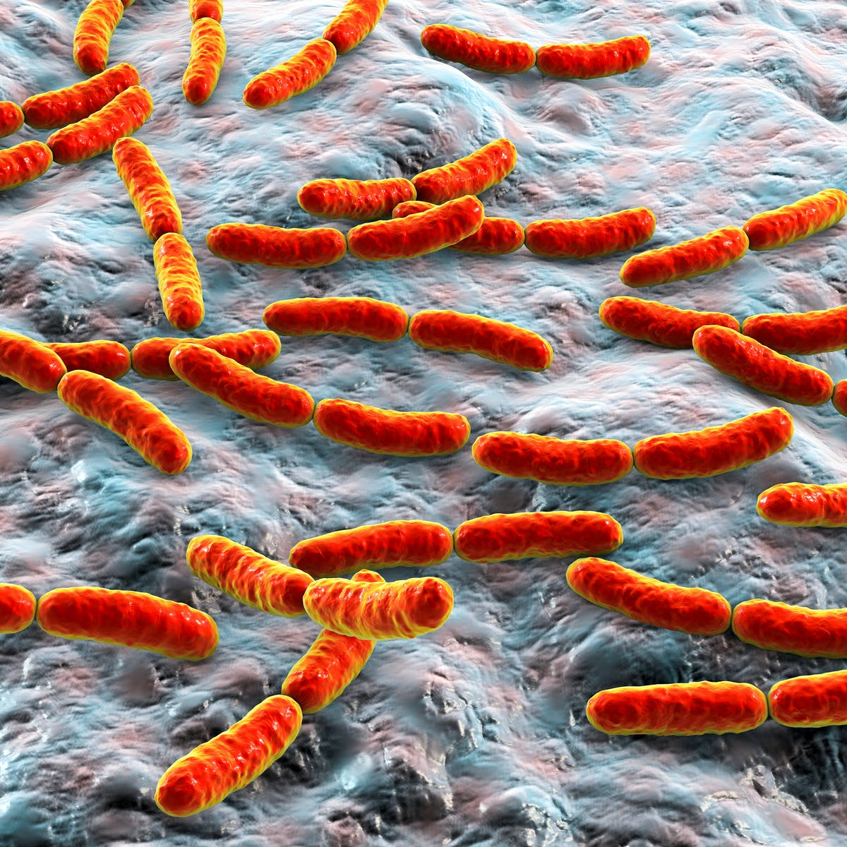 Could your gut microbes hinder your cancer treatment? A new first-in