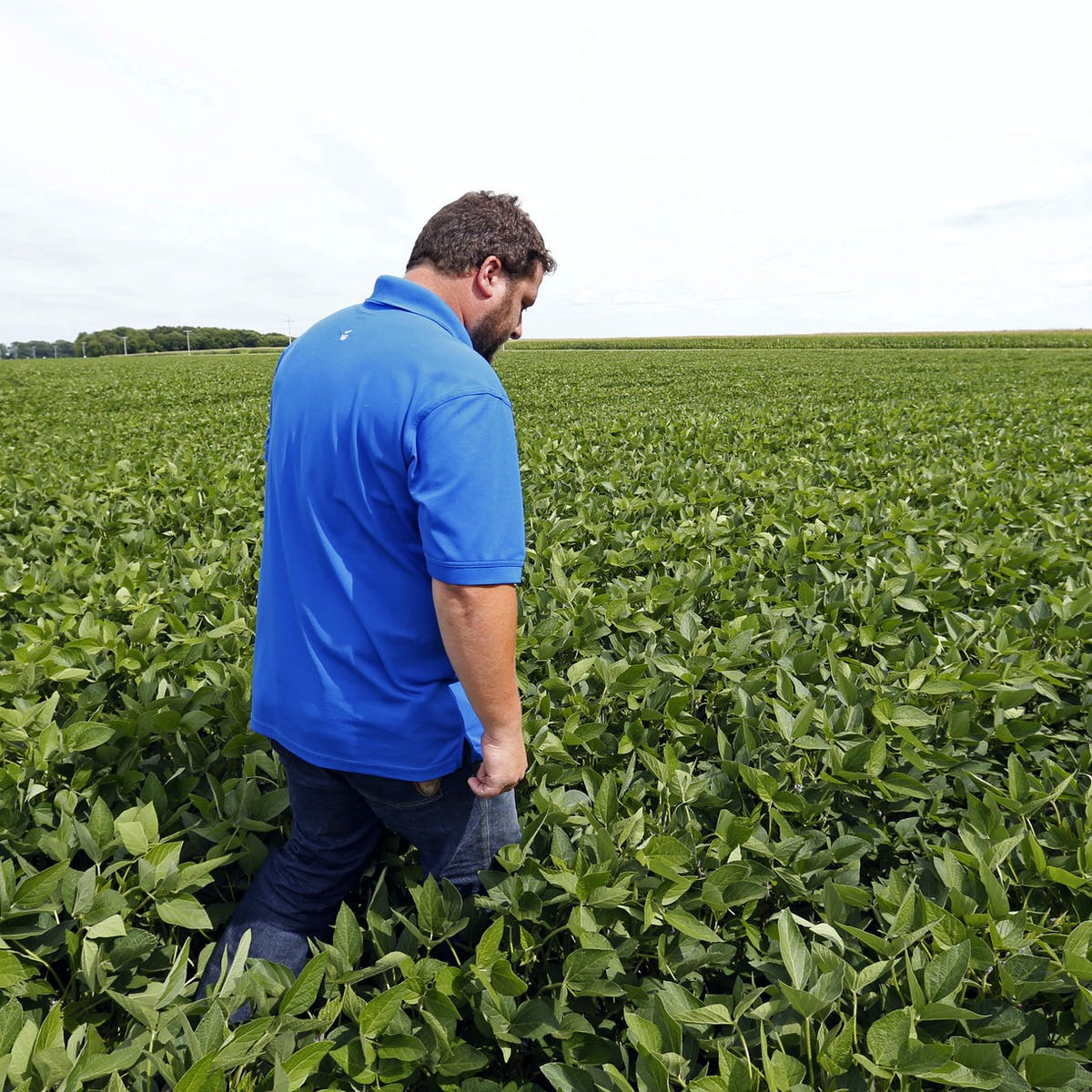 American farmers want trade partners not handouts – an
