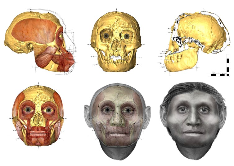 We know why short-statured people of Flores became small – but for the extinct 'Hobbit' it's not so clear