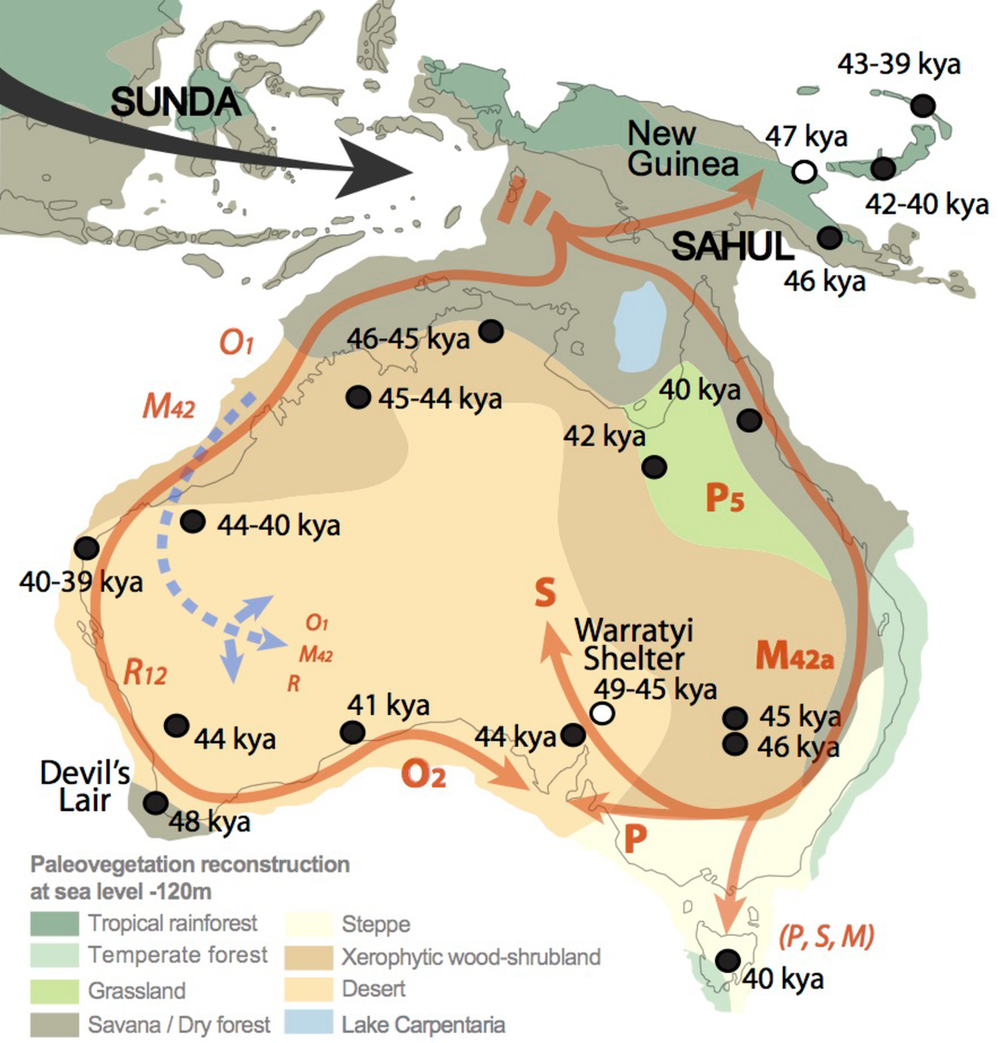 Australia Map Vegetation.When Did Aboriginal People First Arrive In Australia School Of