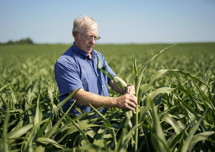 Farmers and agricultural economists worry that Trump's trade policies will cost farms billions of dollars in lost income and force some out of business. AP Photo/Nati Harnik
