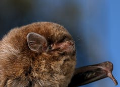 our complicated relationship with bats