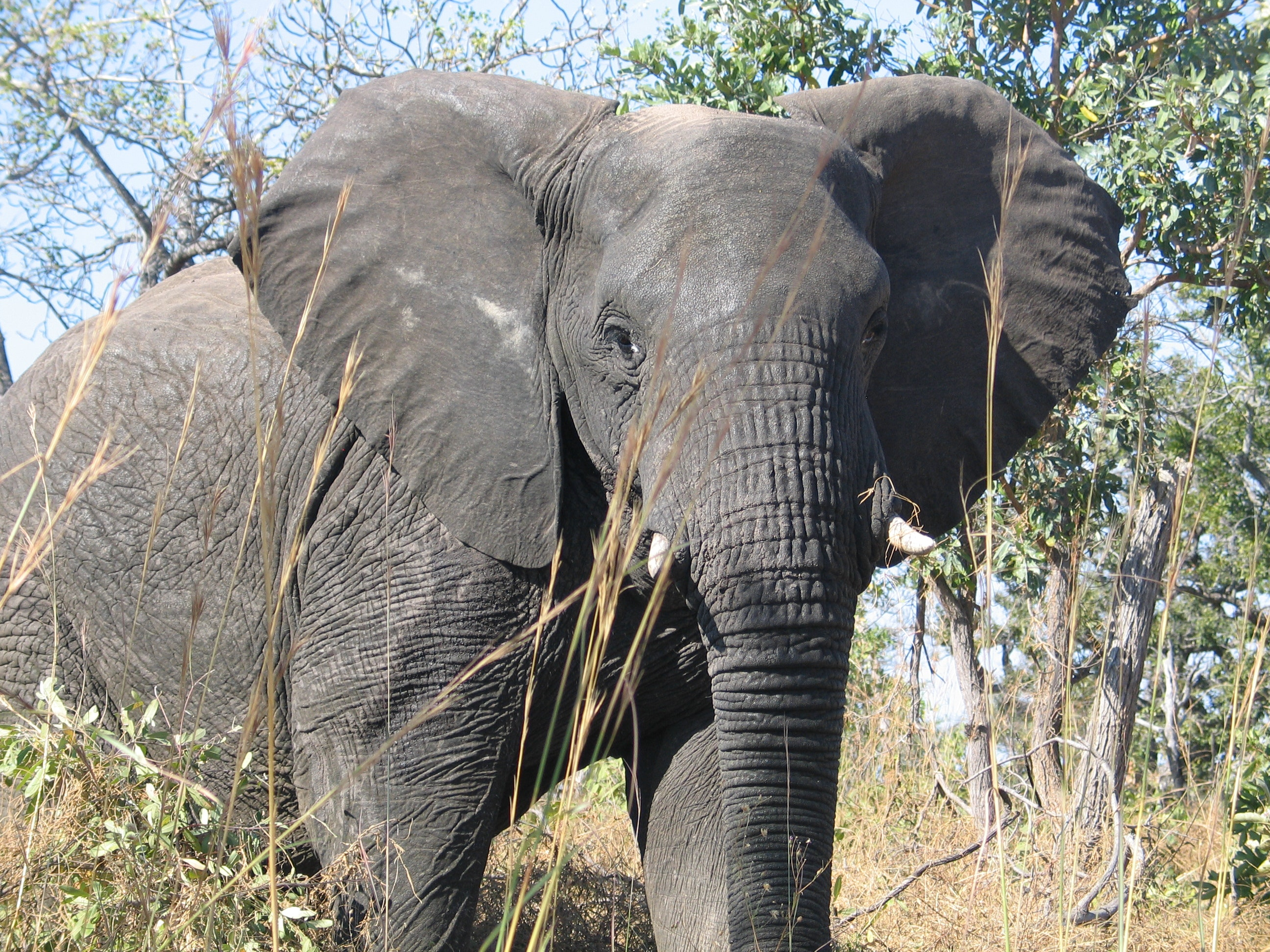 What elephants' unique brain structures suggest about their mental abilities
