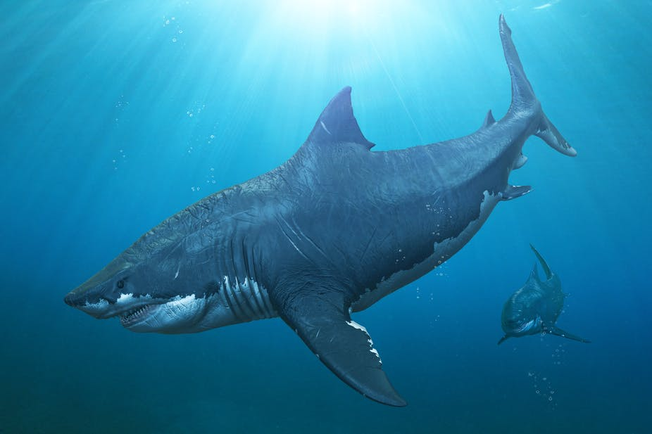 The Meg The Ocean S Fossil Record Is A Treasure Trove For Potential Monster Movies
