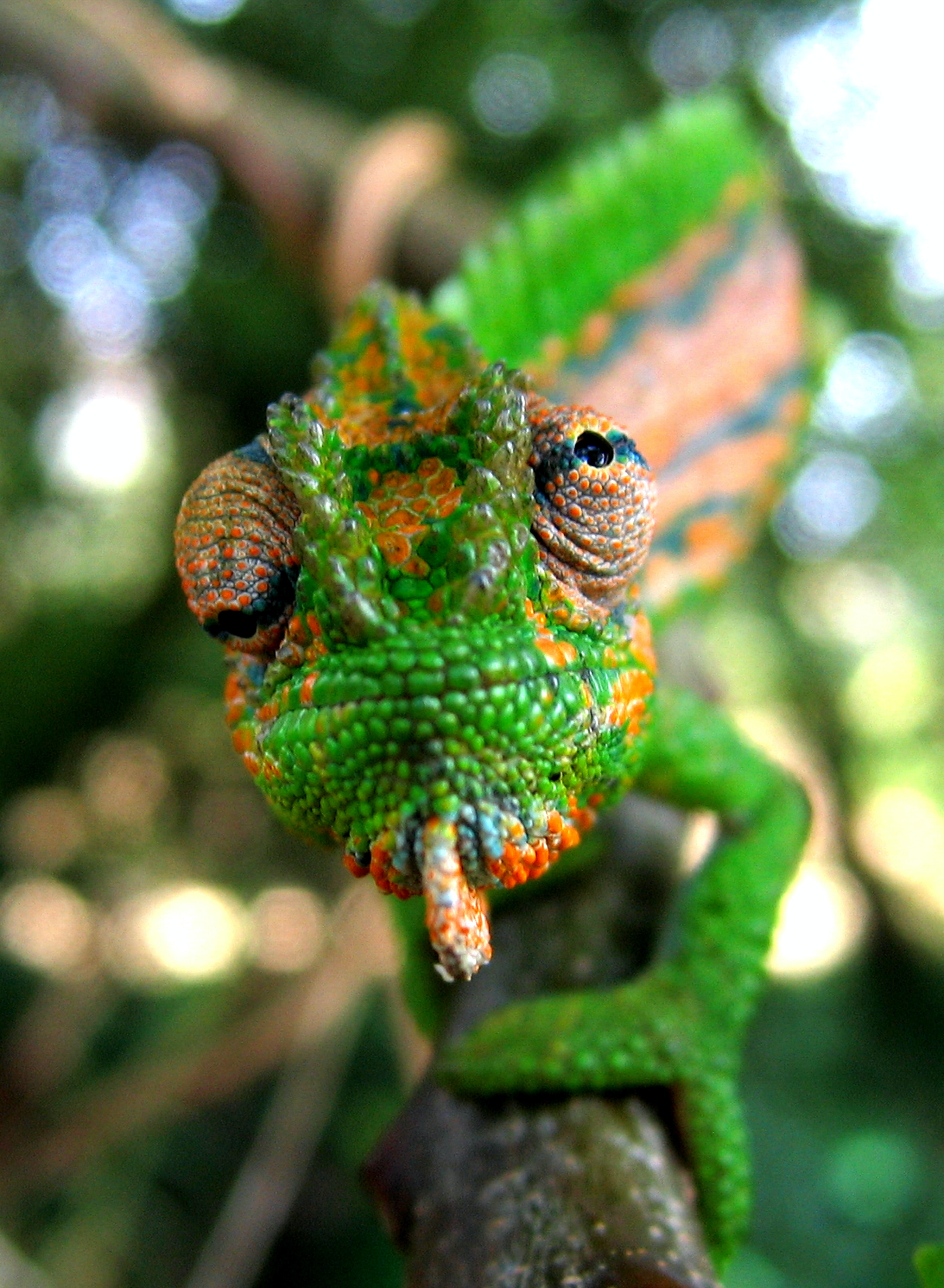 How do chameleons and other creatures change colour