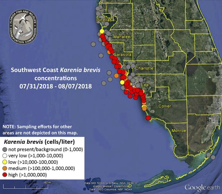 file 20180809 30470 1jq4g5n.png?ixlib=rb 1.1 In: What is causing Florida's algae crisis? | Our Santa Fe River, Inc. (OSFR) | Protecting the Santa Fe River in North Florida