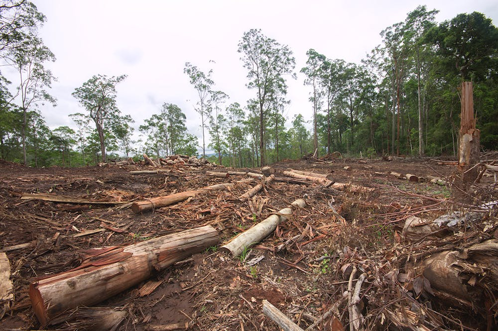 Can we offset biodiversity losses?
