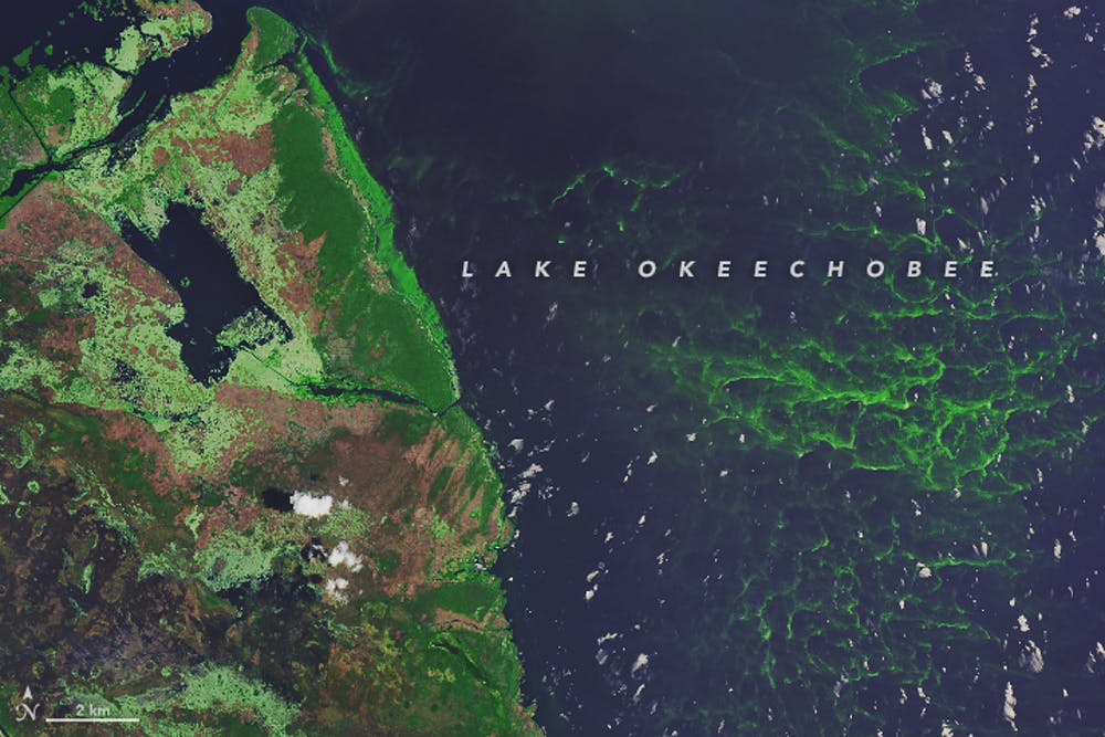 What Is Causing Florida S Algae Crisis 5 Questions Answered