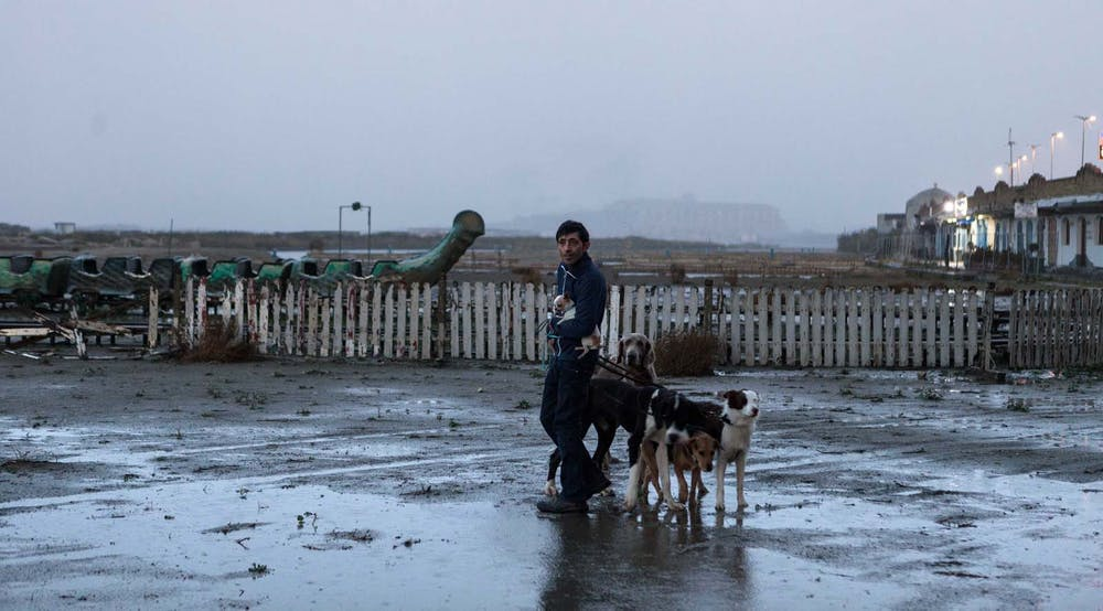 Matteo Garrone's Dogman needs more dogs