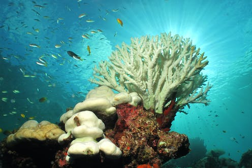 The Great Barrier Reef Has Been Bleaching For At Least 400