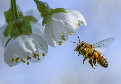 a bee economist explains honey bees vital role in growing tasty almonds