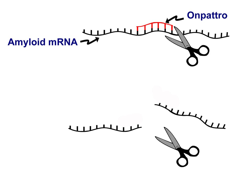 Approval Of First Rna Interference Drug Why The Excitement