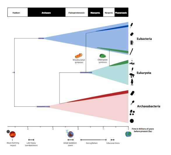 an analysis of the origin of life on earth by evolution Earth & life history: evidence from rocks allows us to understand the evolution of life on earth the rock cycle includes the formation of new sediment and rocks and rocks are often found in layers, with the oldest generally on the bottom.