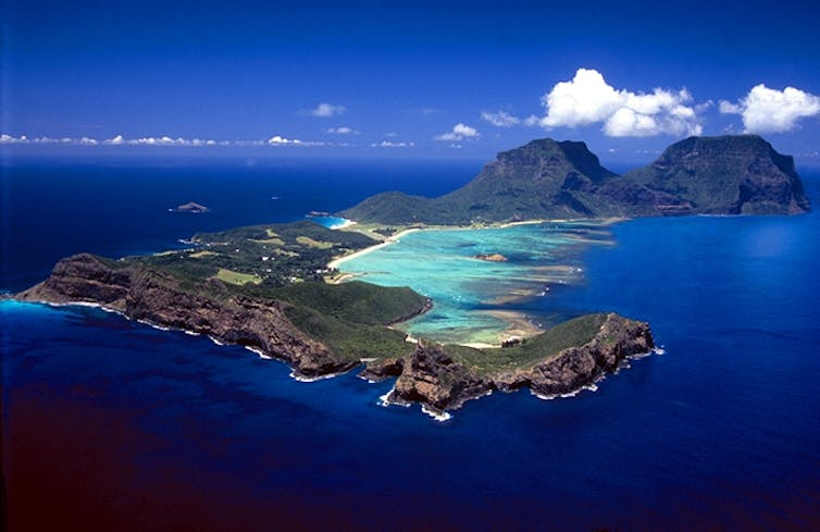 The Lord Howe screw pine is a self-watering island giant