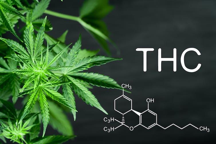 Why synthetic marijuana is so risky