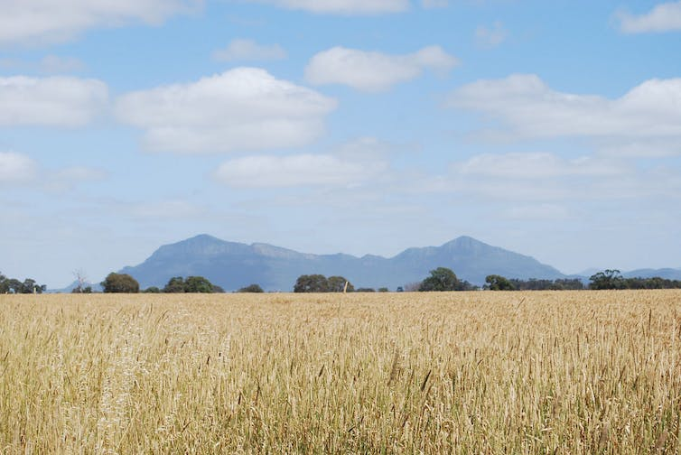 Australia's grain exports will suffer under climate change. Alpha/Flickr, CC BY-NC